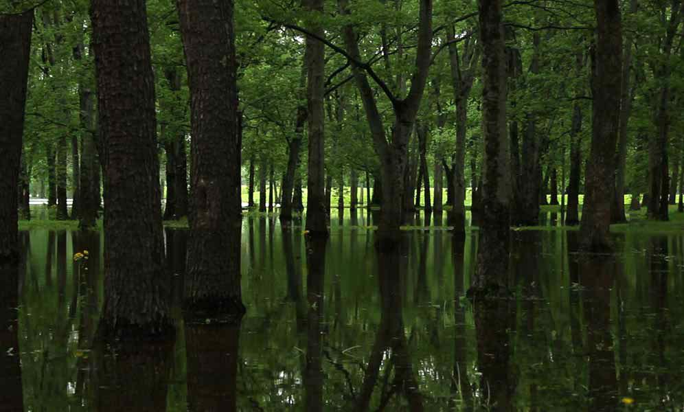 MS Swamp