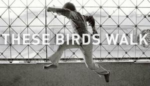 TheseBirdsWalk